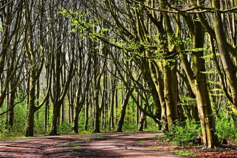 forest-3334948_1280.jpg